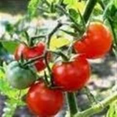 Fructe si legume care potolesc setea