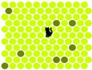 Prinde pisica neagra- Chat Noir - Flash game